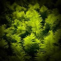 Memories Of Green