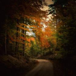 Sleepy forest II by peregrin71