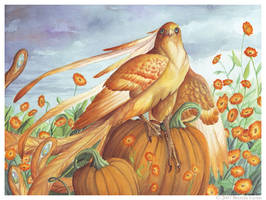 Birdflowers: Calendula - Oct. by windfalcon