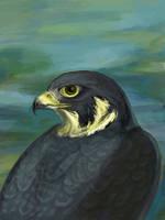 Falcon Love by windfalcon