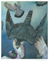 Peregrine Falcon - Study by windfalcon
