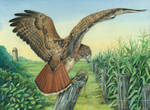 Thesis - Red-tailed Hawk