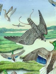 Thesis - Peregrine Falcon