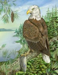 Thesis - Bald Eagle