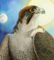 Thesis - Lanner Falcon