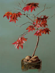 Japanese Maple by windfalcon