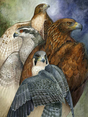 Four North American Raptors