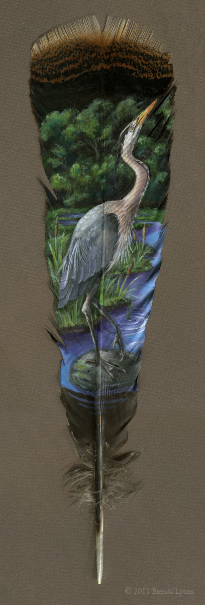 Great Blue Heron - Feather by windfalcon