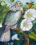 Hedge Bindweed Nectarbird