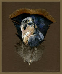 Peregrine Painted Feather by windfalcon