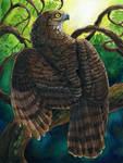 Madagascar Serpent Eagle