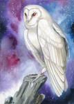 Galaxy Owl