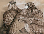 Three Red-Tails