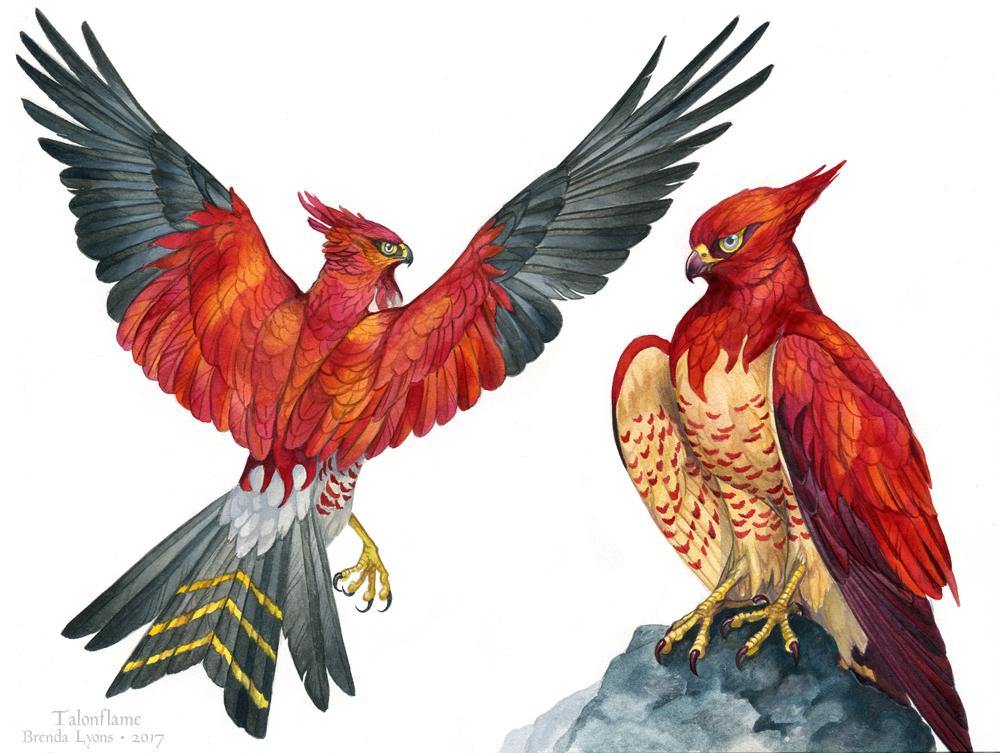 Pokemon Birds - Talonflame by windfalcon
