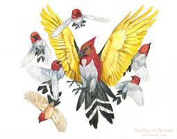Pokemon Birds - Fletchling and Fletchinder