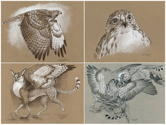 Simple Toned Paper Sketches - Batch 2 by windfalcon