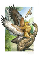Haast's Eagle - Sixth Extinction Deck by windfalcon