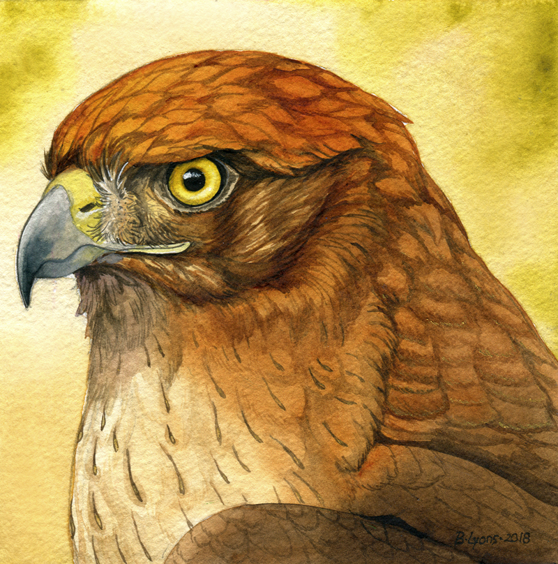 Sunbird by windfalcon