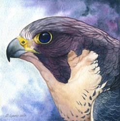 Moonbird by windfalcon