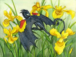 Red-Winged Blackbird Dragon