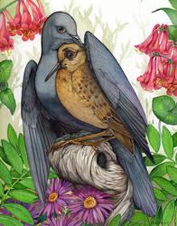 Dove and Piper