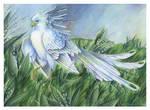 Birdflowers : Lily - May