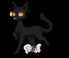 Fetch! :: Haunting Black Cat