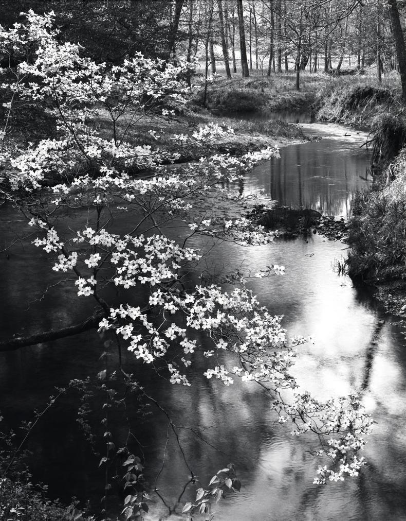 Blossom by MrMushroomMan