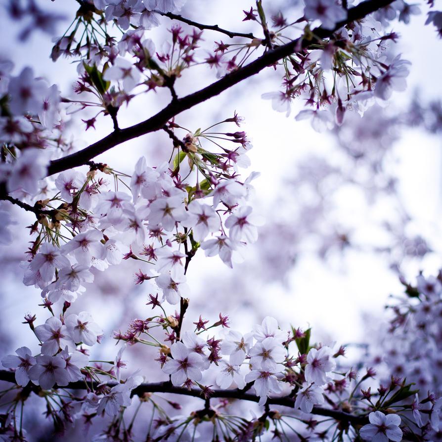 spring by anja-B