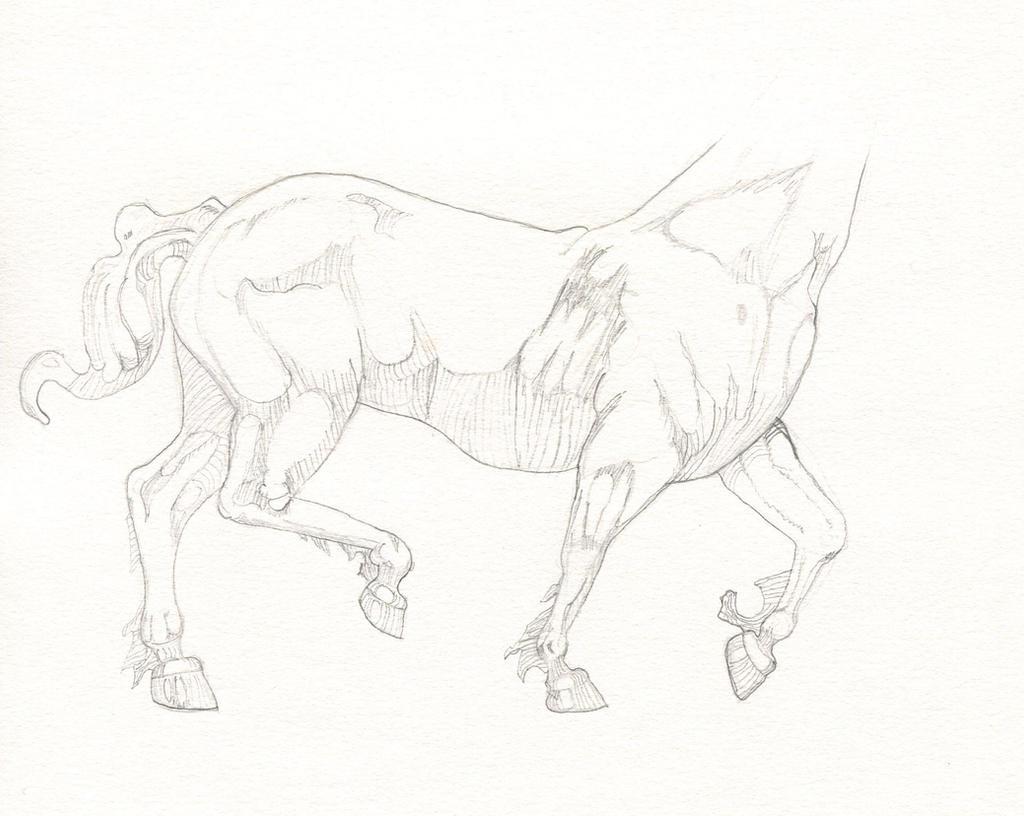 Horse by JaxWerx