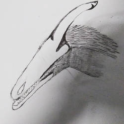 Random Bird Wyvern practice sketch