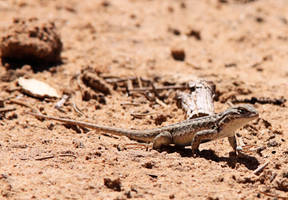 Lizard1