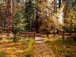 Pine Valley 1