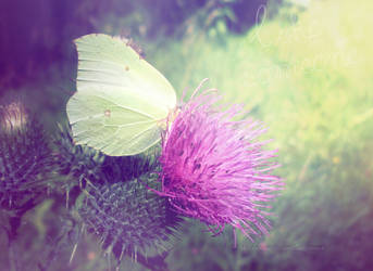 butterfly by LadyAmme