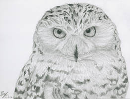 Snowy Owl by DoctorPsyduck