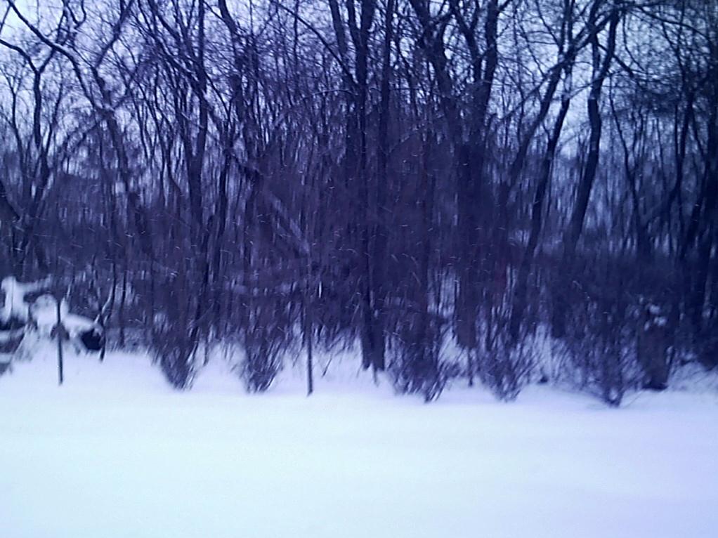 Winter Wonderland by VintageCanine
