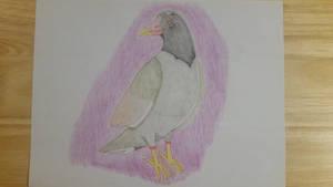 Dino the Common Moorhen (1st Commission) {OC Bird}