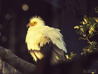 The Early Bird by Nejjington