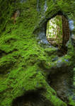 Natural window - In the Forest
