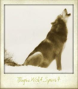 MagicWolfSpirit's Profile Picture