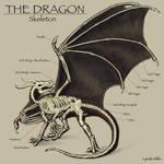 Dragon Anatomy -- Part Two