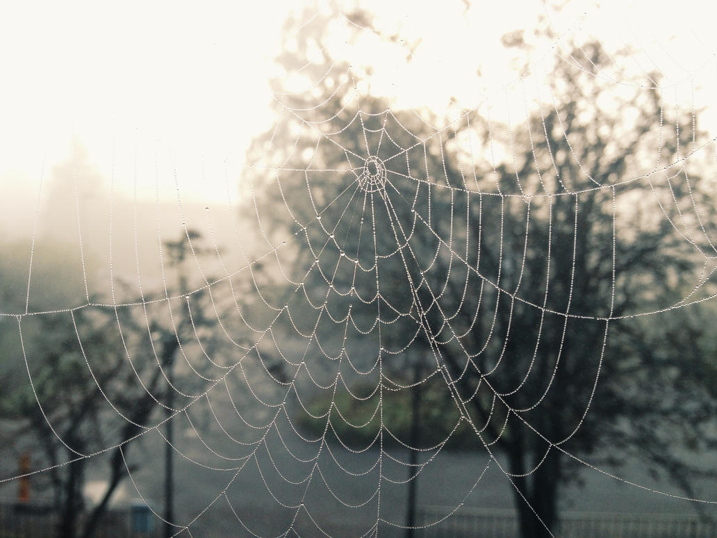 Spiderweb by Vidaa