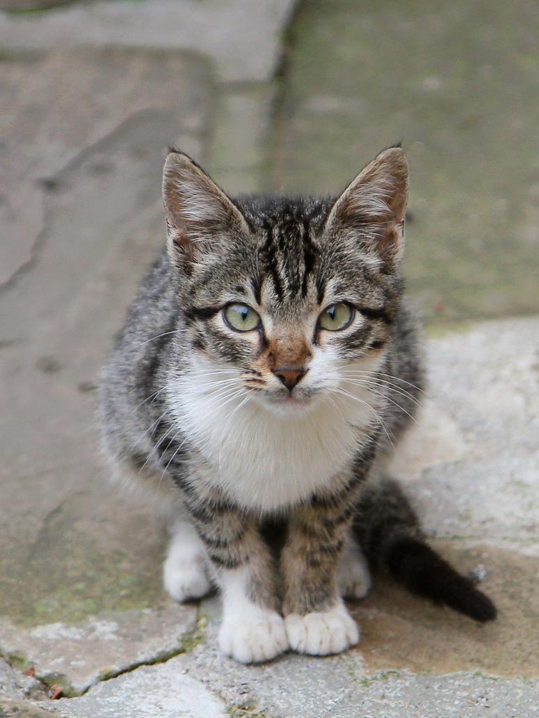 Kitty by shtirliz