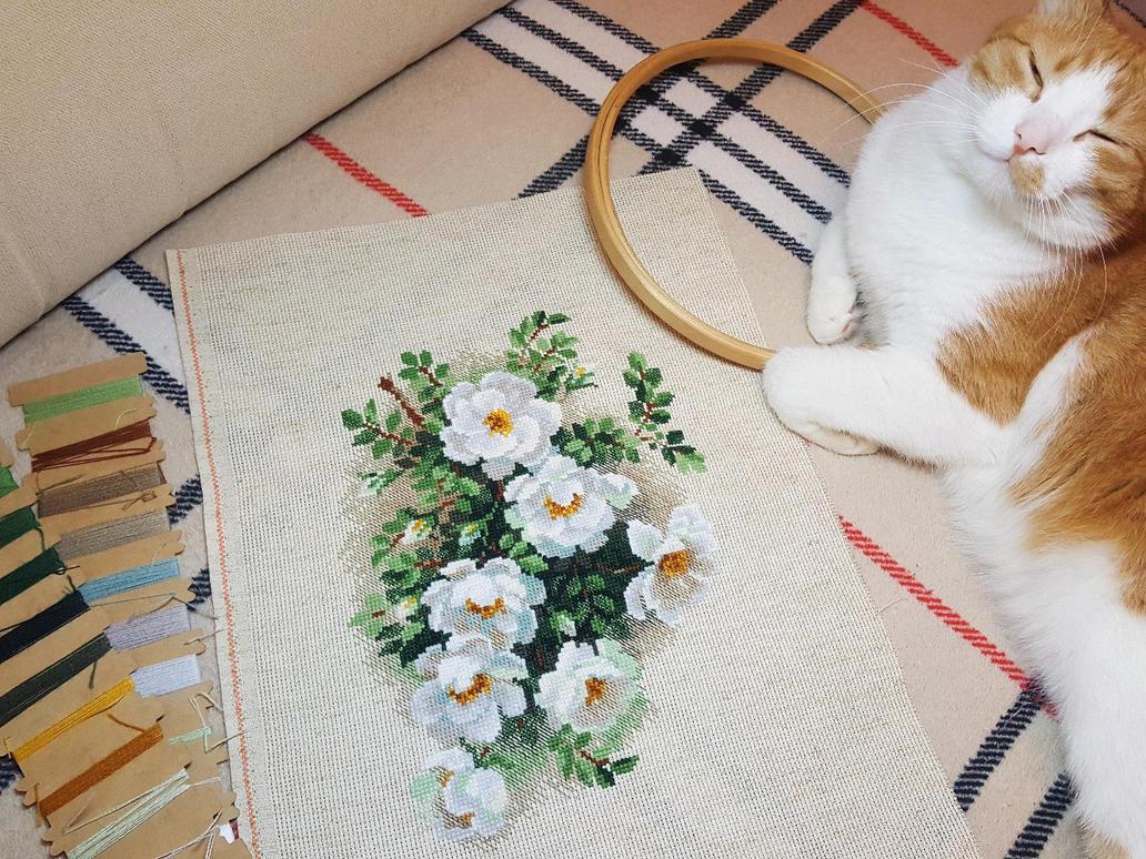 White rose by karfagenika