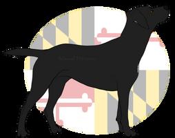 Balmoral's Della Mae by Balmoral-Retrievers