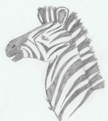 Zebra Profile by Zebra...