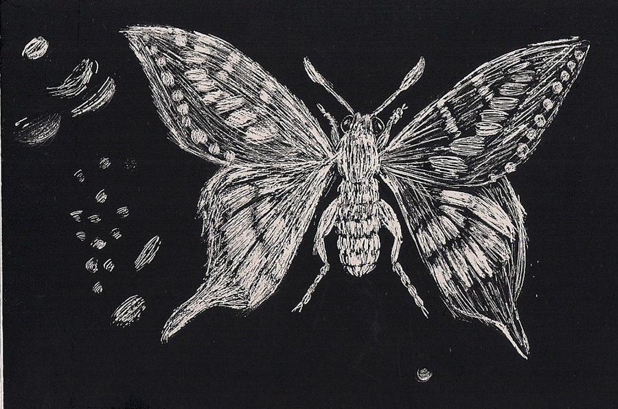 Butterfly scratchboard - photo#1
