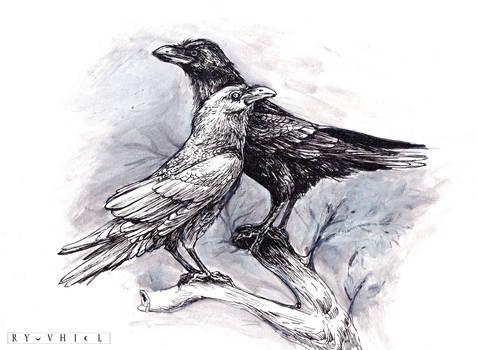 5/31 Raven