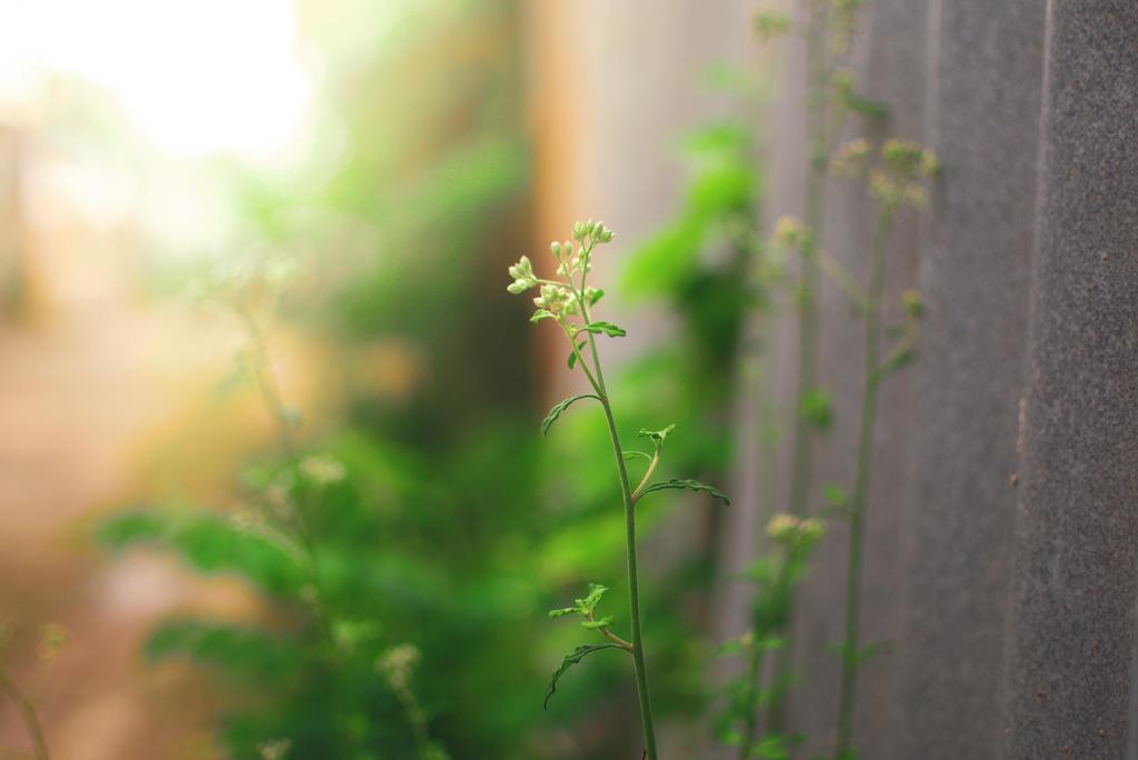 flowering grasses.