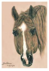 Sailduino, QH Stallion